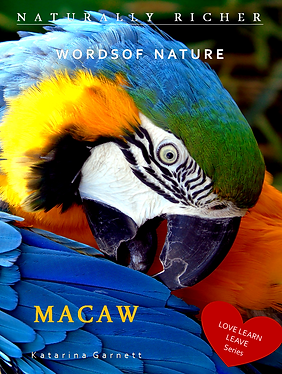 MACAW cover 20,32 x 25,4.png