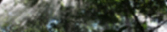 cloud-forest-1504970_1920.jpg
