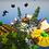 Thumbnail: Spooky Village Skyblock Spawn