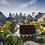 Thumbnail: Spring - PVP Arena