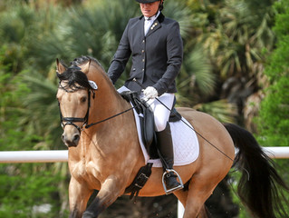Basler Dressage Welcomes German Riding Pony stallion, SF Spirit!