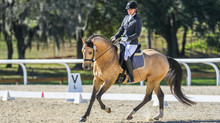 SF Spirit is Second Level Champion at Snowbird's Paradise Dressage Show!