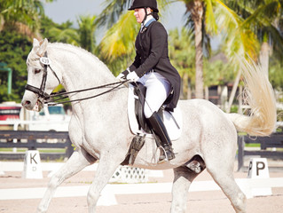 Basler Dressage moves to Orlando