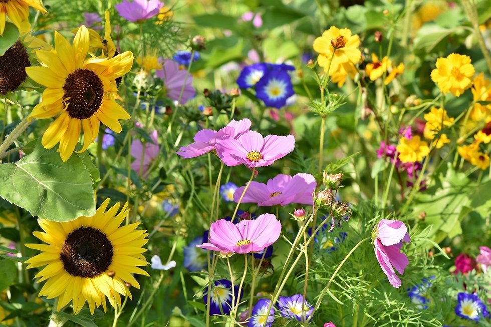 Blühwiese 3.jpg