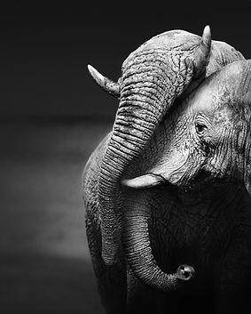 Elephants%20Embracing_edited.jpg
