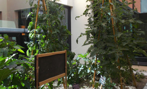 Jardinage Groupe famille (1).JPG