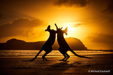 Australian Geographic Nature Photographer of the Year Competition 2021