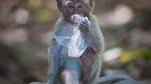 Crikey! 2020 Australia Zoo Photography Competition