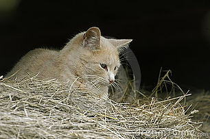 feral-farm-cat-barn-11548363.jpg