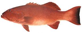 coral trout boat hire darwin