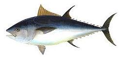 tuna boat hire darwin