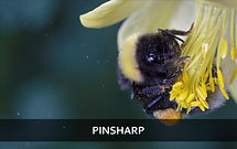 pinsharp_2_edited.jpg