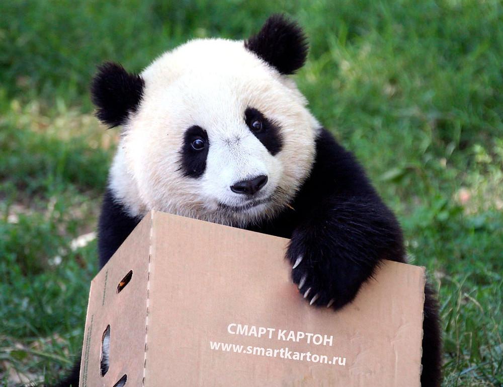 """Купить оптом картонные коробки из гофрокартона в Москве можно в лучшей компании по производству и продаже гофрокартона """"Смарт Картон"""".   +7 (495) 142-88-72   +7 (977) 795-86-61   www.smartkarton.ru"""