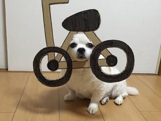 Мода на гофрокартон дошла до собак