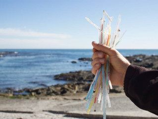 Трубочки из картона спасут мир от загрязнения