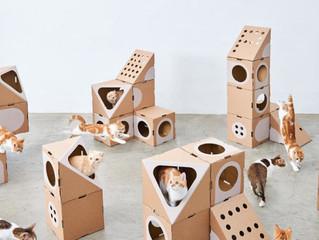 Картонные коробки сложной высечки - любимое место кошек во всем мире