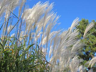 Гофрокартон будут делать из сибирской травы