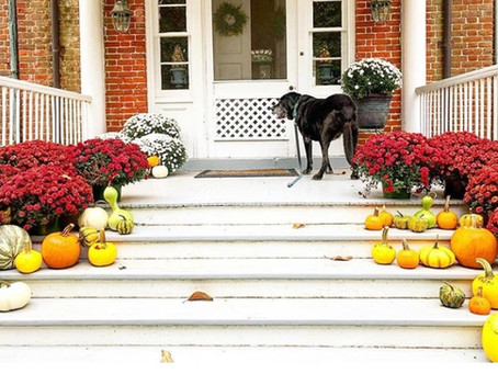 7 Fantastic Finds During Fall at Sugar Water Manor