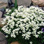 Останкинский совхоз декоративного садоводства