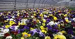 садовый центр измайлово, гбу озеленеие, тепличный комплекс, цветы, рассада, семена , магазин садовод