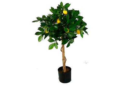 Лимон сортовой d 25