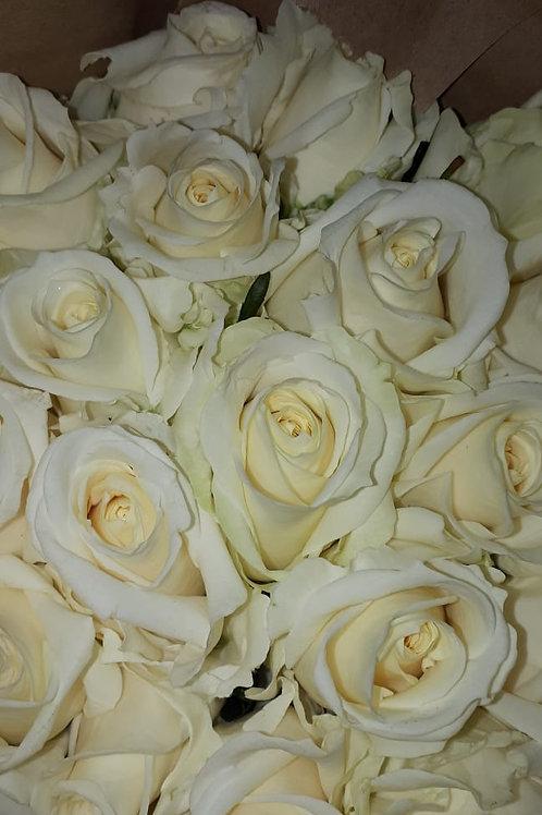 "Роза ""Аваланш"" (упаковка - 20 шт) - 50 см"