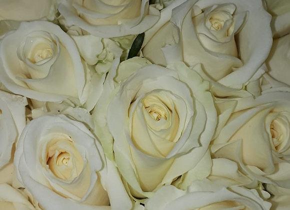 "Роза ""Аваланш"" (упаковка - 20 шт) - 60 см"