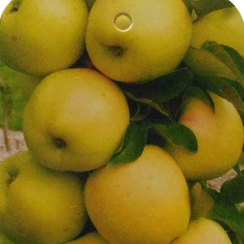 Яблоня «Медок»