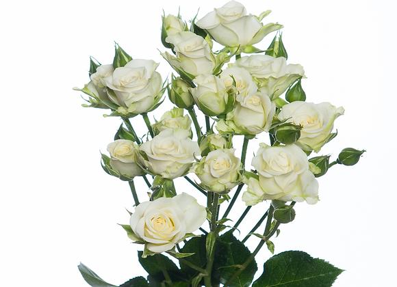 "Роза ""Сноуфлейк""  (упаковка - 20 шт) - 60 см"