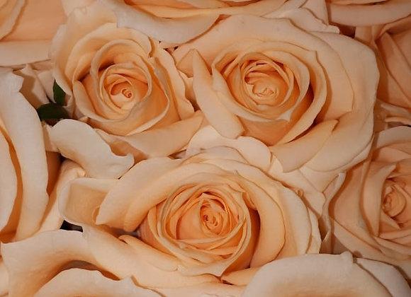 """Роза """"Пич Аваланш"""" (упаковка - 20 шт) - 60 см"""