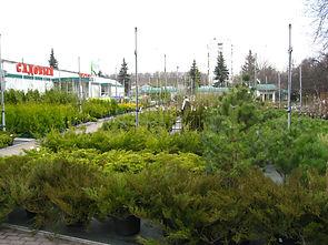 Контакты измайловский совхоз декоративного садоводства, гбу озеленение измайловский контакты, садовый центр измайловский на 16 парковой.