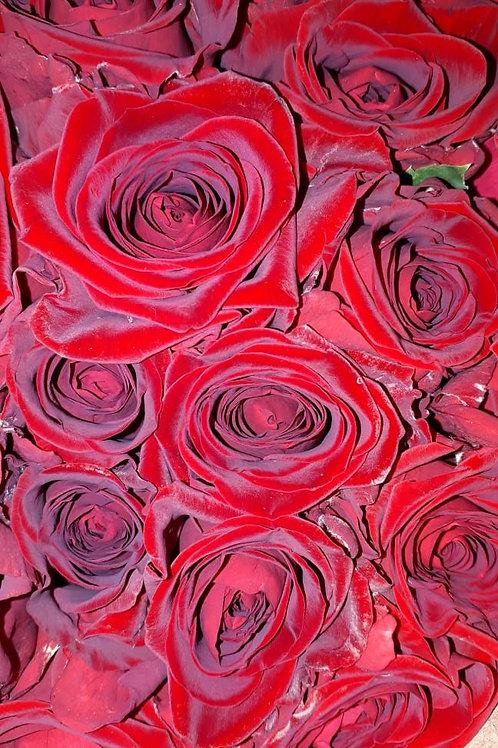 "Роза ""Ред Романтик"" (упаковка - 20 шт) - 40 см"