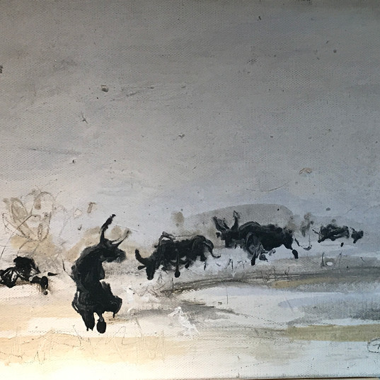 Bulls in the fields