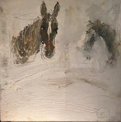 Horse facing a horse