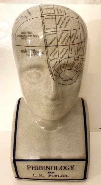 Large Reproduction Phrenology head