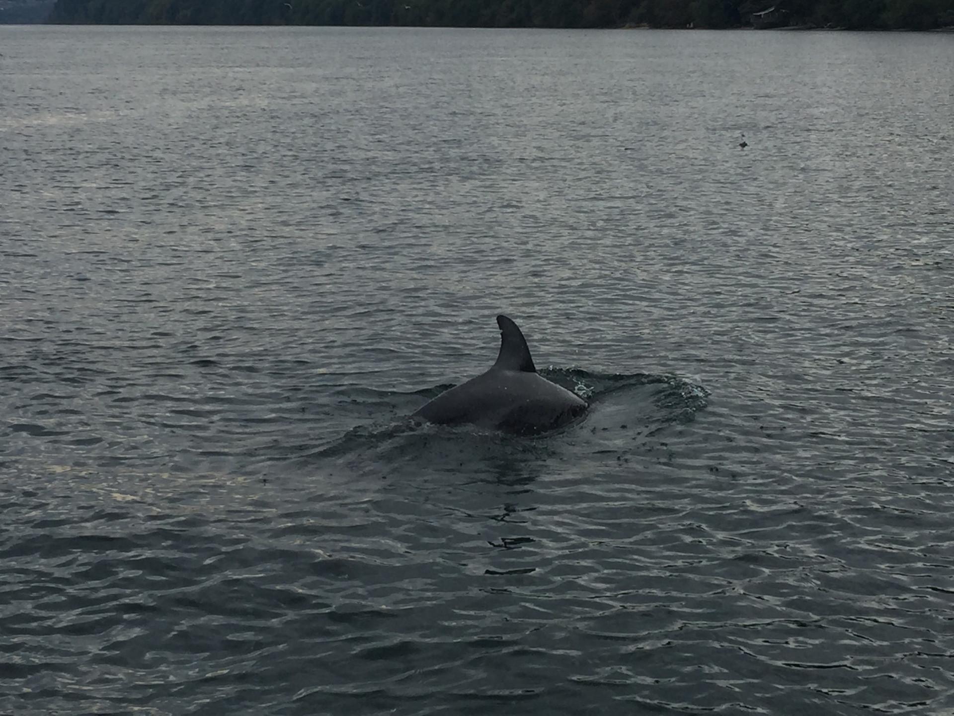 21 Puget Sound