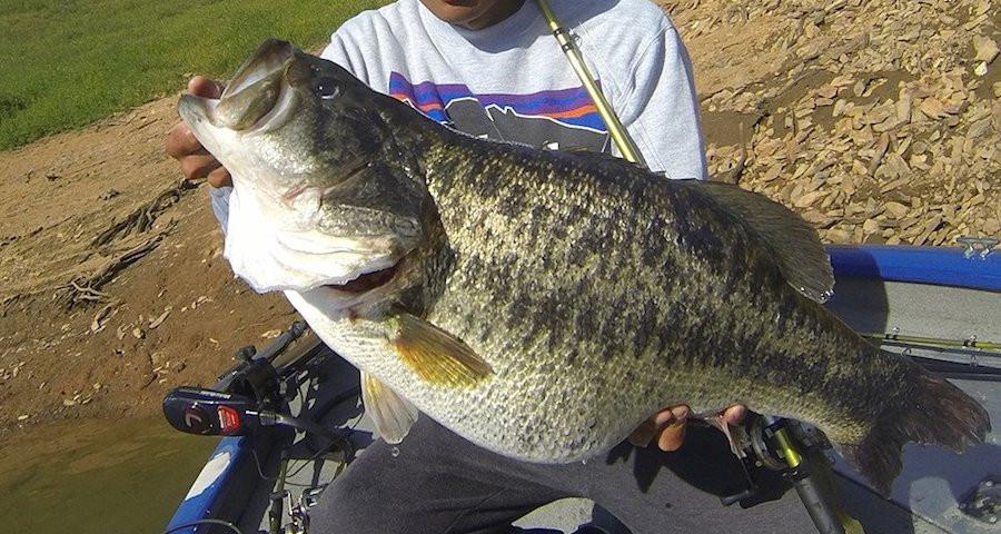 Lunker Bass.jpg