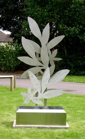 Greenhill Leaf Tree