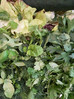 Green Summer Gazpacho Recipe