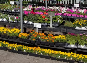 Annual flower arrangements are available in the spring and will add plenty of summer color to your landscape!