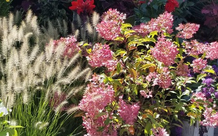 pruning your landscape plants will keep them happy and flowering