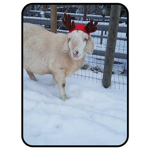 Greeting Card- Featuring Billy