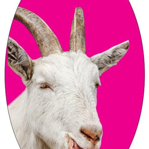 5x3 Sticker - Cooper on Pink