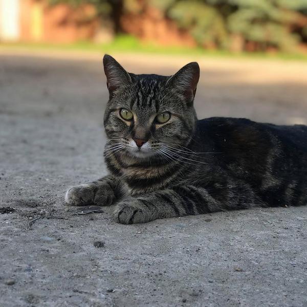 Tiger 6.16.21.png