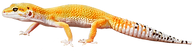about_reptiles_by_mack-1000x263.png