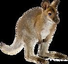 canva-wallaby-MAASsaXeK3I.png