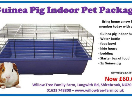 Guinea pig pet package