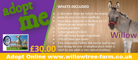 willow adopt 2.PNG