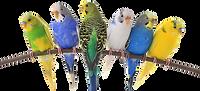 birds-exotics-pets.png