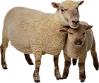 sheep-clipart-mother-and-baby-7.png